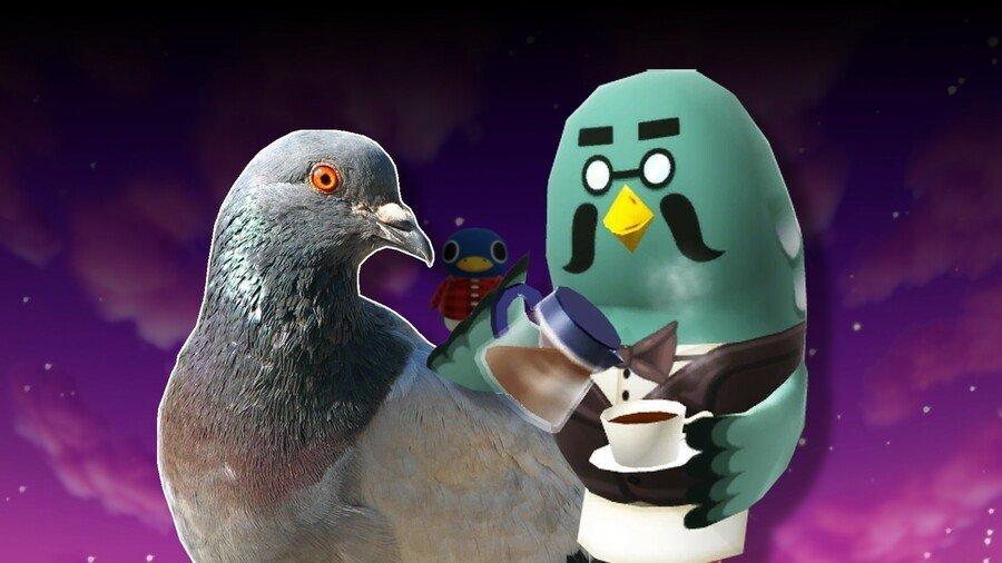 Los oscuros secretos de la leche de paloma